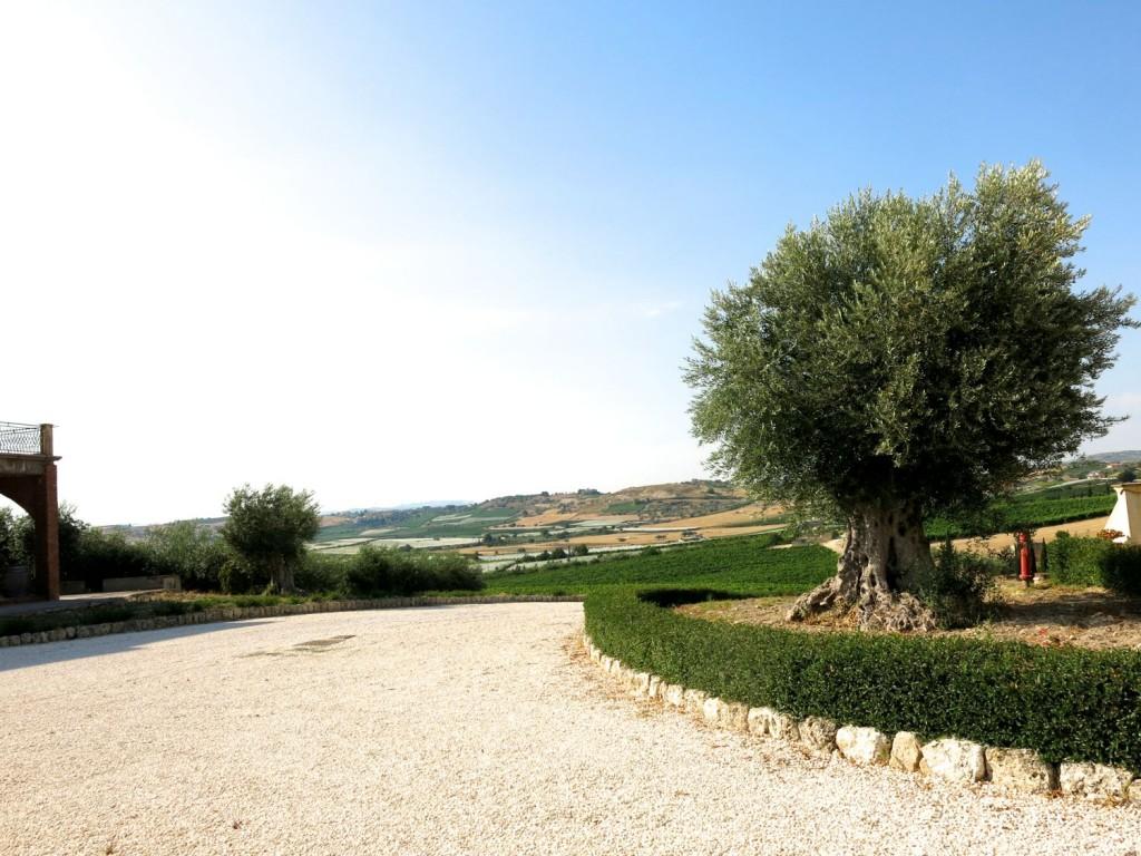 Sicily Bagliodel Cristo di Campobello 2015 July 3 - 276