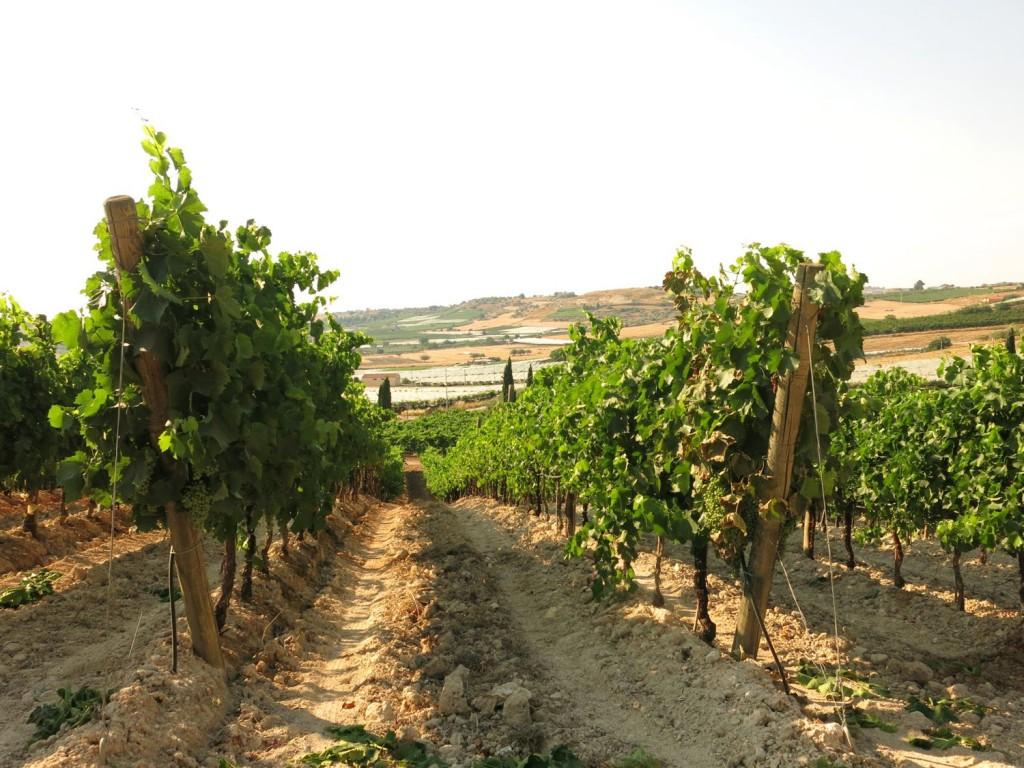 Sicily Bagliodel Cristo di Campobello 2015 July 3 - 288