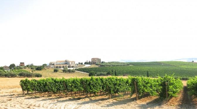 Sicily Bagliodel Cristo di Campobello 2015 July 3 - 292